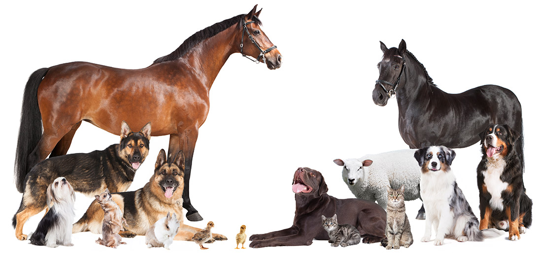 Different breeds of animals