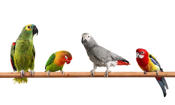 Four birds on a perch